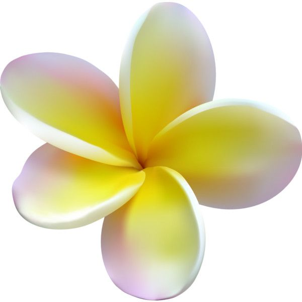 plumeria found on Polyvore featuring flowers, fillers, yellow fillers, yellow, backgrounds, phrase, quotes, saying and text