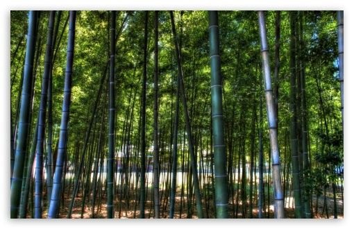 Inside The Bamboo Forest Hd Desktop Wallpaper High Definition