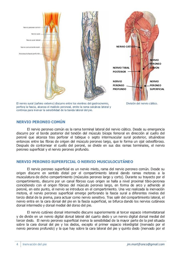 Miembro inferior ciatico nervio