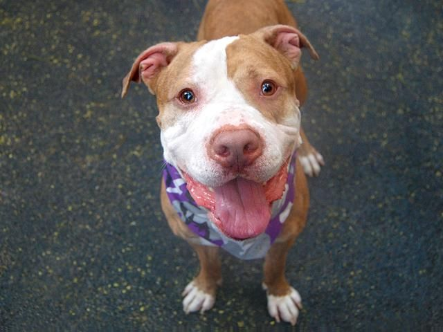 Pin On New York City Pound Dogs Nycacc