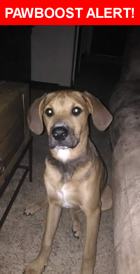 Please spread the word! Moonshine was last seen in Milton, FL 32571.  Description: Friendly. He has white on his throat and chest as well as black arrested and his neck where the collar goes. He is 10 months old.  Nearest Address: 5624 Windrun Place, Pace, FL, United States