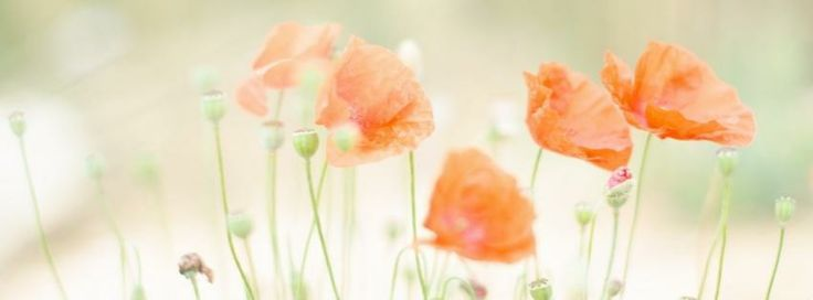 Summertime country facebook covers | Poppies summer facebook cover ...
