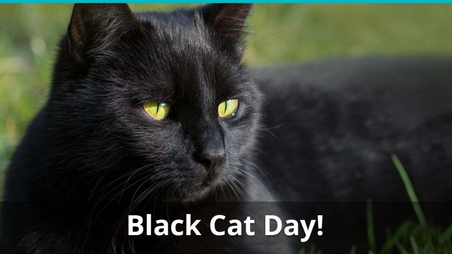 Happy National Black Cat Day Black Cat Day National Black Cat Day Black Cat Appreciation Day