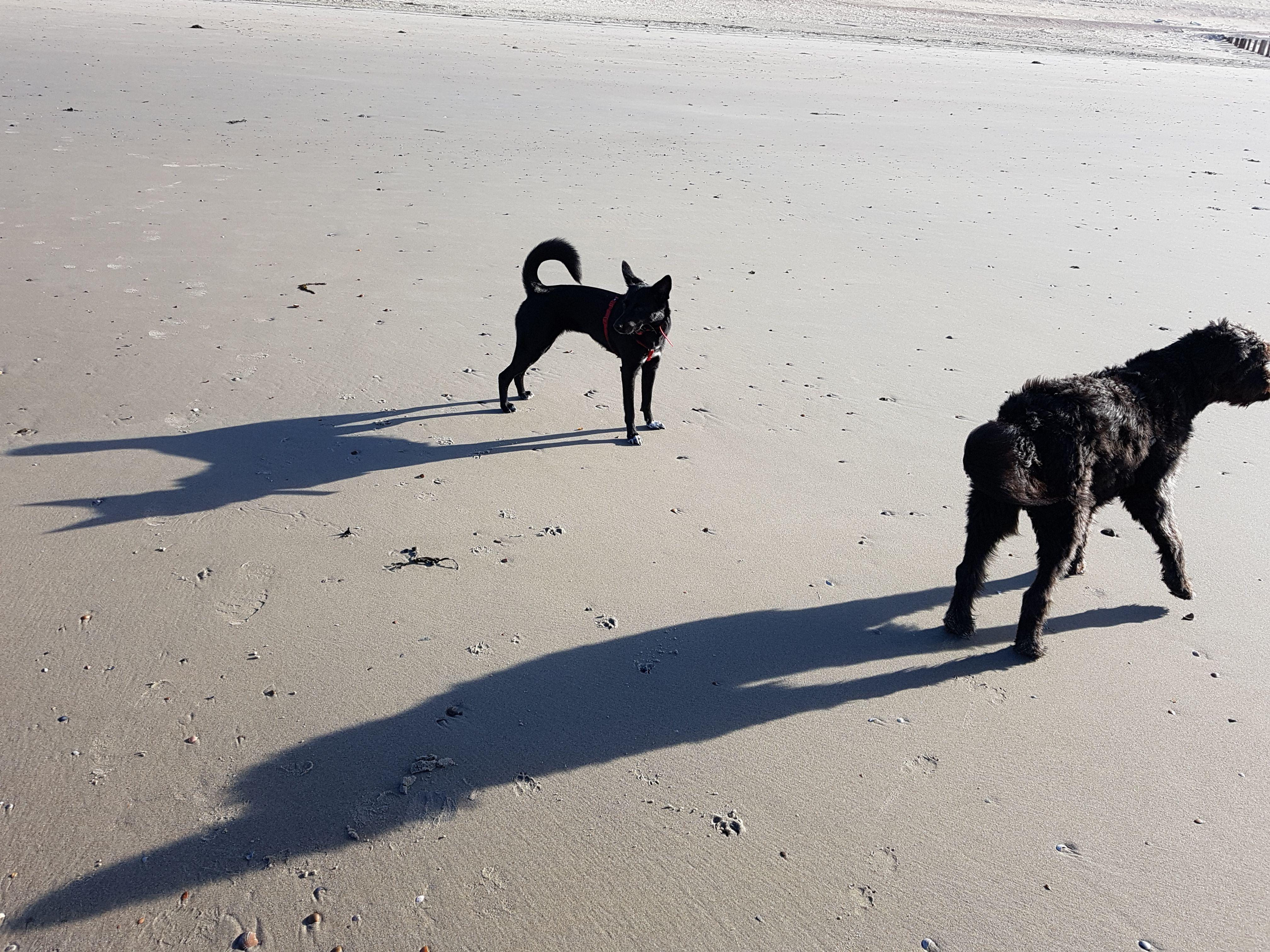 Dogs Hunde Beach Strand Schatten Shadow Mit Bildern