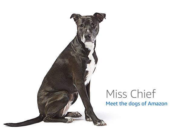 Sit Stay Play Dogs Dog Names Whippet