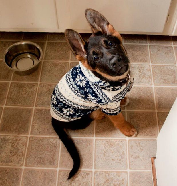 Adorable Animals Wearing Miniature Sweaters Ready For Winter - 22 adorable animals wearing miniature sweaters