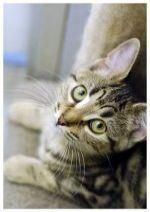 Keeping Cats Safe From Antifreeze Poisoning Rspca Cat Safe Cats Tabby Kitten