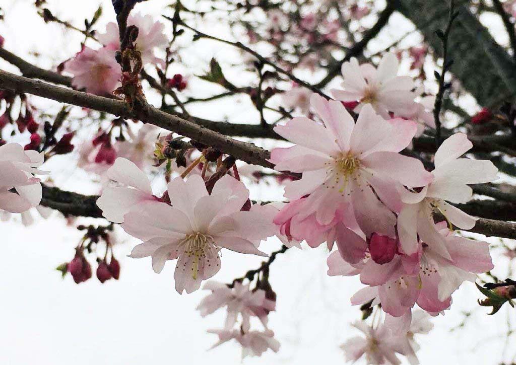 Wood Bracelet Flower Resin Bracelet Real Flower Bracelet Smartyleowl Resin Art Resin Jewelry Resin Diorama Cherry Blossom Season Flowers Sakura Tree