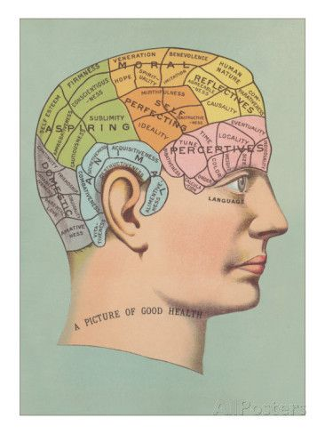 Phrenology Chart of Head Chart, Art prints and Healthy mind