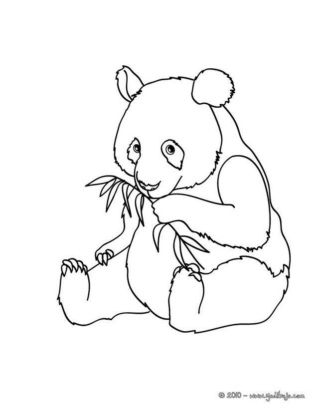 Dibujos ANIMALES SALVAJES para colorear, Oso Panda em el bosque ...