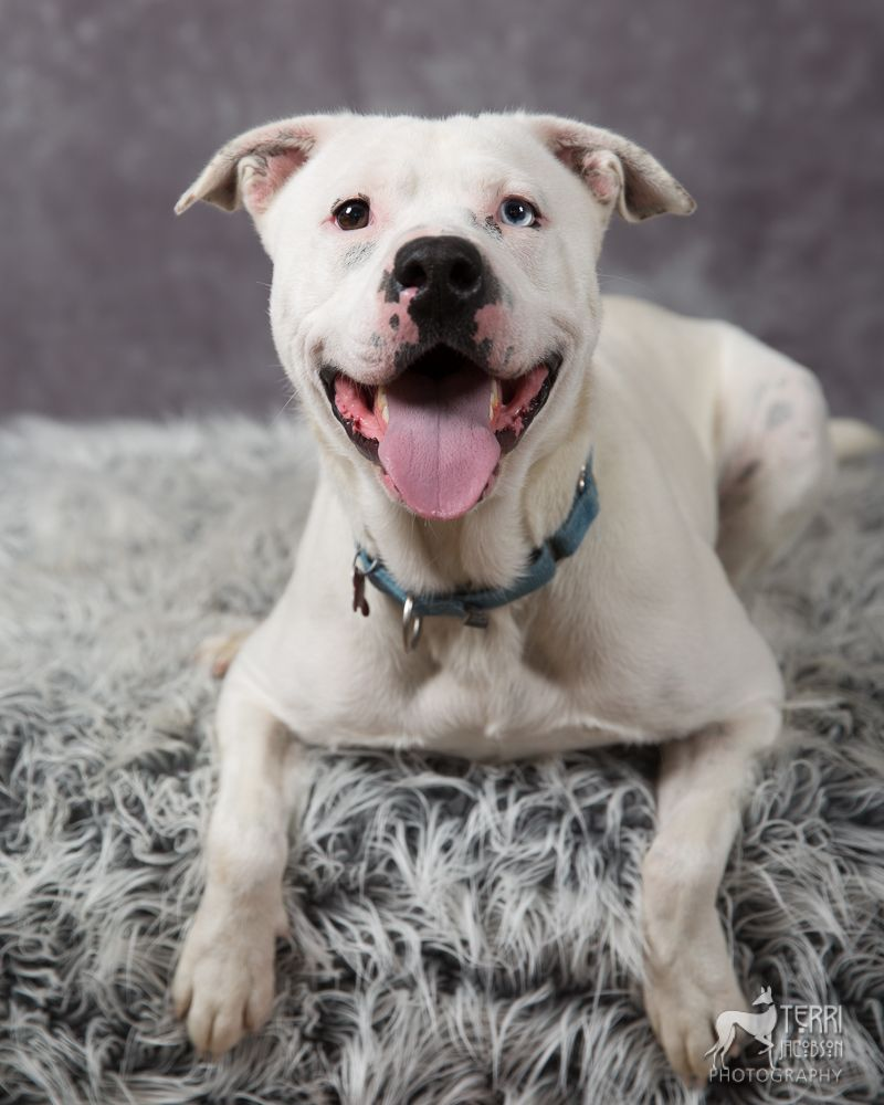 Adopt Rascal aka Krypto on (With images) Dogs, Terrier