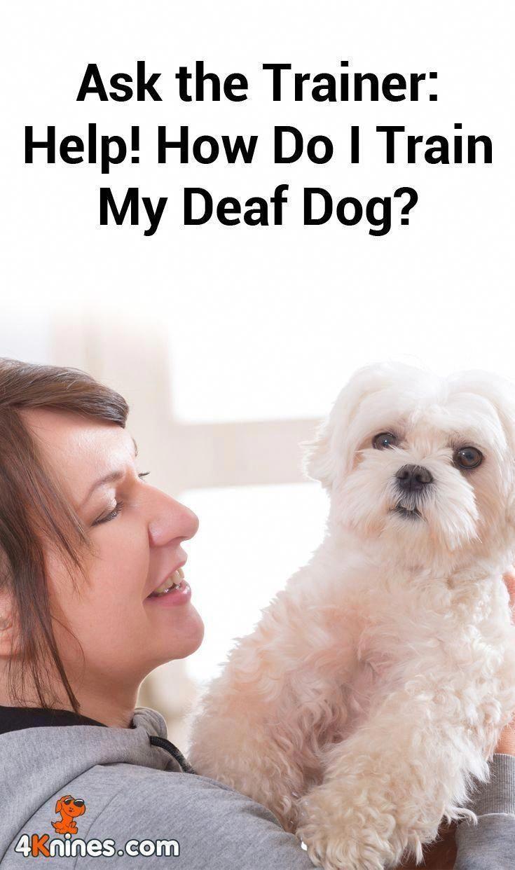 do your own dog wash near me