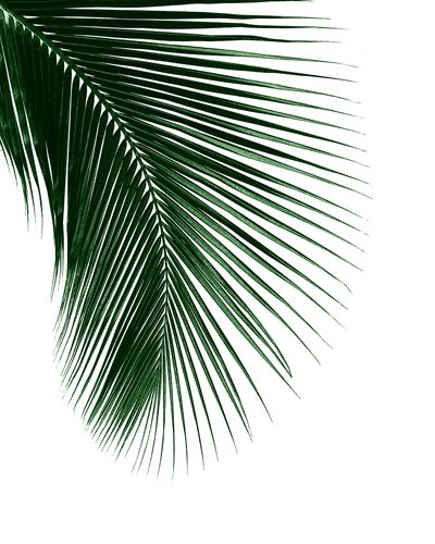 Palm Tree Iphone Wallpaper: Leaf Art, Botanical Art, Art