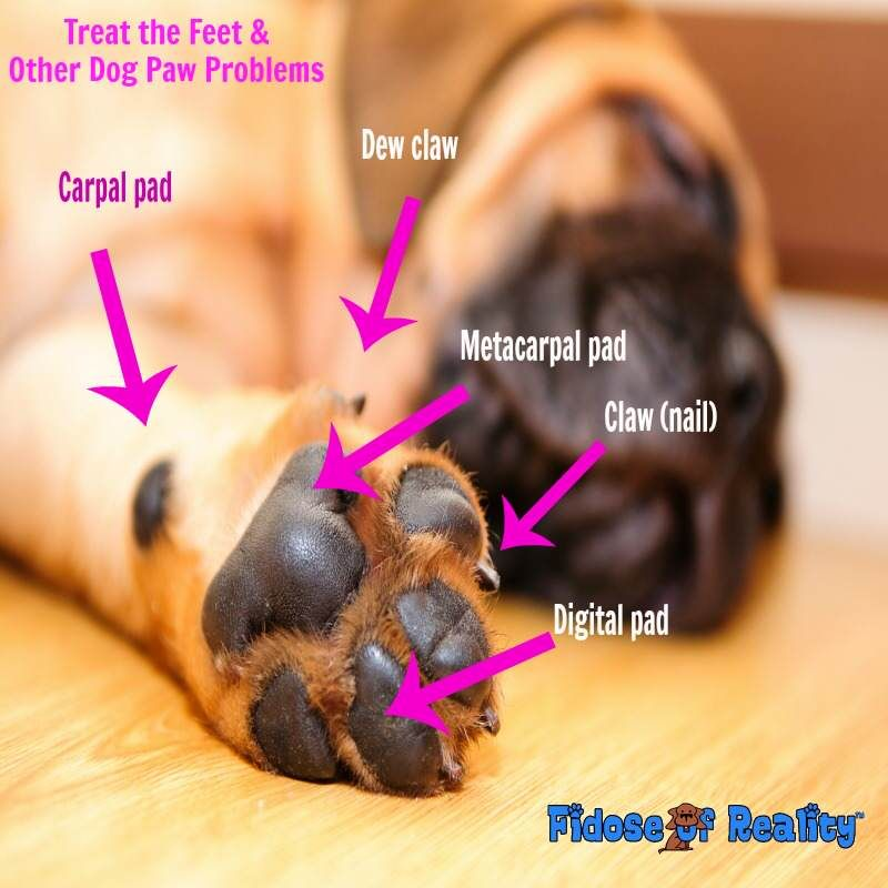 Treat The Feet And Other Dog Paw Problems Fur Babies