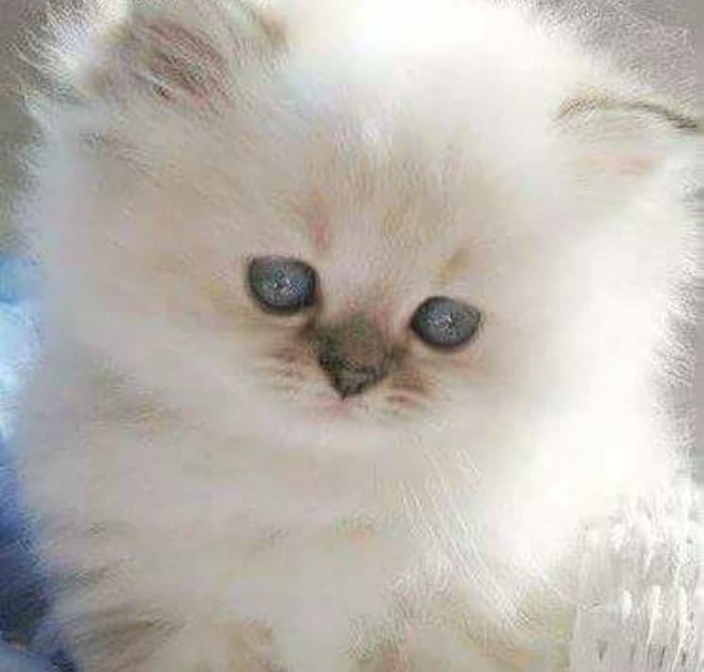 Fotoğraf Cute kittens, Kediler ve yavruları, Sevimli