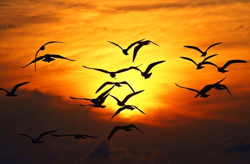 Pinturas De Pajaros Volando Buscar Con Google Aves Volando