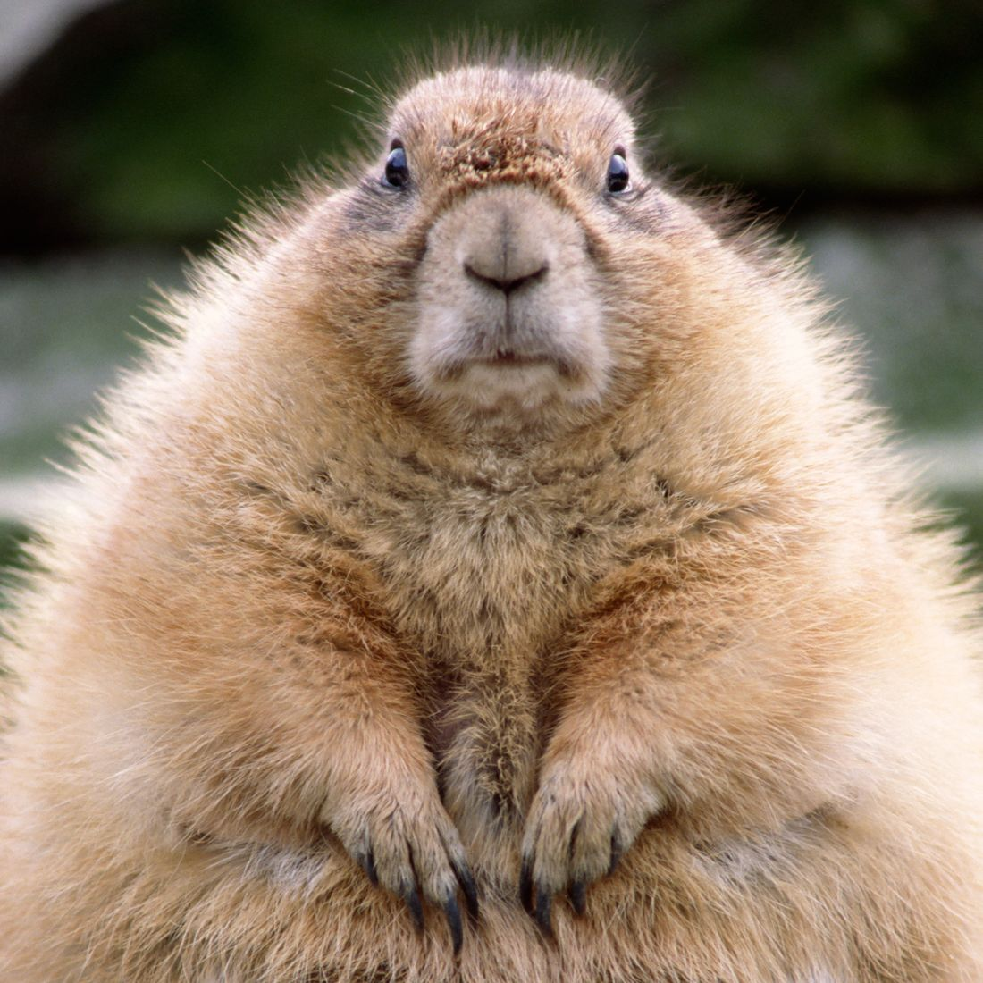 Happy Groundhog Day! (Photo: remem/Getty Images)