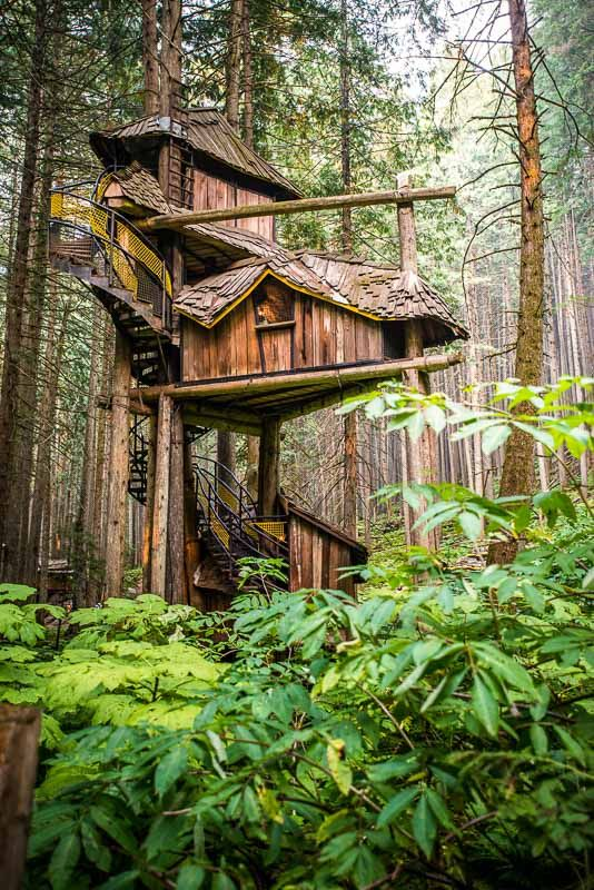 BC's tallest, grandest tree house that rises 50 feet into ...