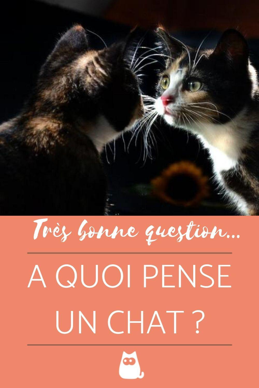C'est Pas Sorcier Les Chats : c'est, sorcier, chats, PENSE, PSYCHOLOGIE, Chat,, Comportement, Chats, Chatons