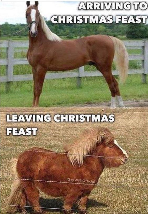 New Funny Pets A Hearty Collection Of Horse Memes To Chuckle To Horse - ARRIVING TO CHRISTMAS FEAST LEAVING CHRISTMAS FEAST IG @WM.Official 4