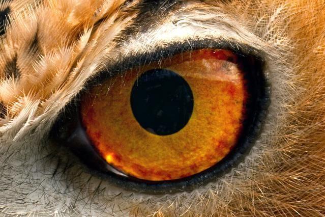 How Do Birds Use Their 5 Senses? | Science '14-15 | Eyes