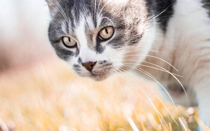 Lataa kuva Egeanmeren kissa, 4k, kuono, lemmikit