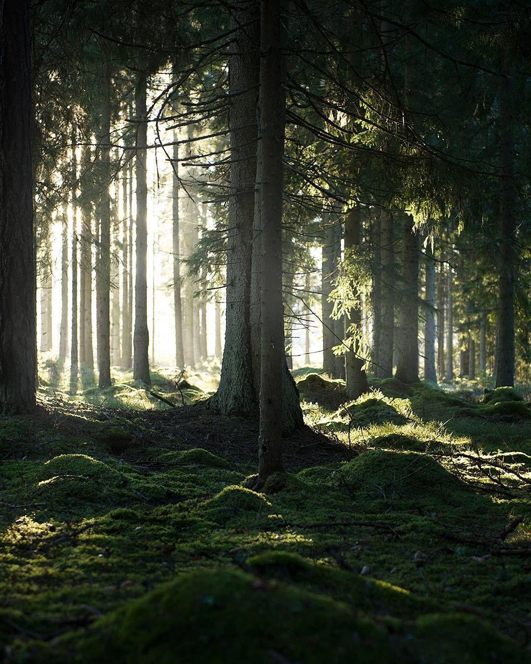 фото волшебный лес ряд титулованных боксеров