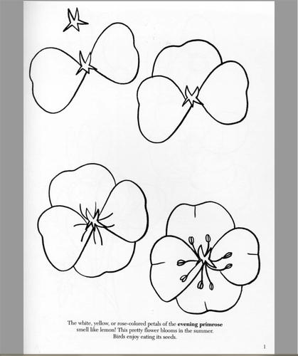 Comment dessiner un coquelicot comment dessiner - Fleur a dessiner facile ...