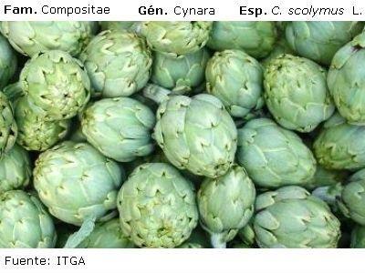 Aportan 2.000 euros a la promoción y difusión de la alcachofa de la Vega Baja