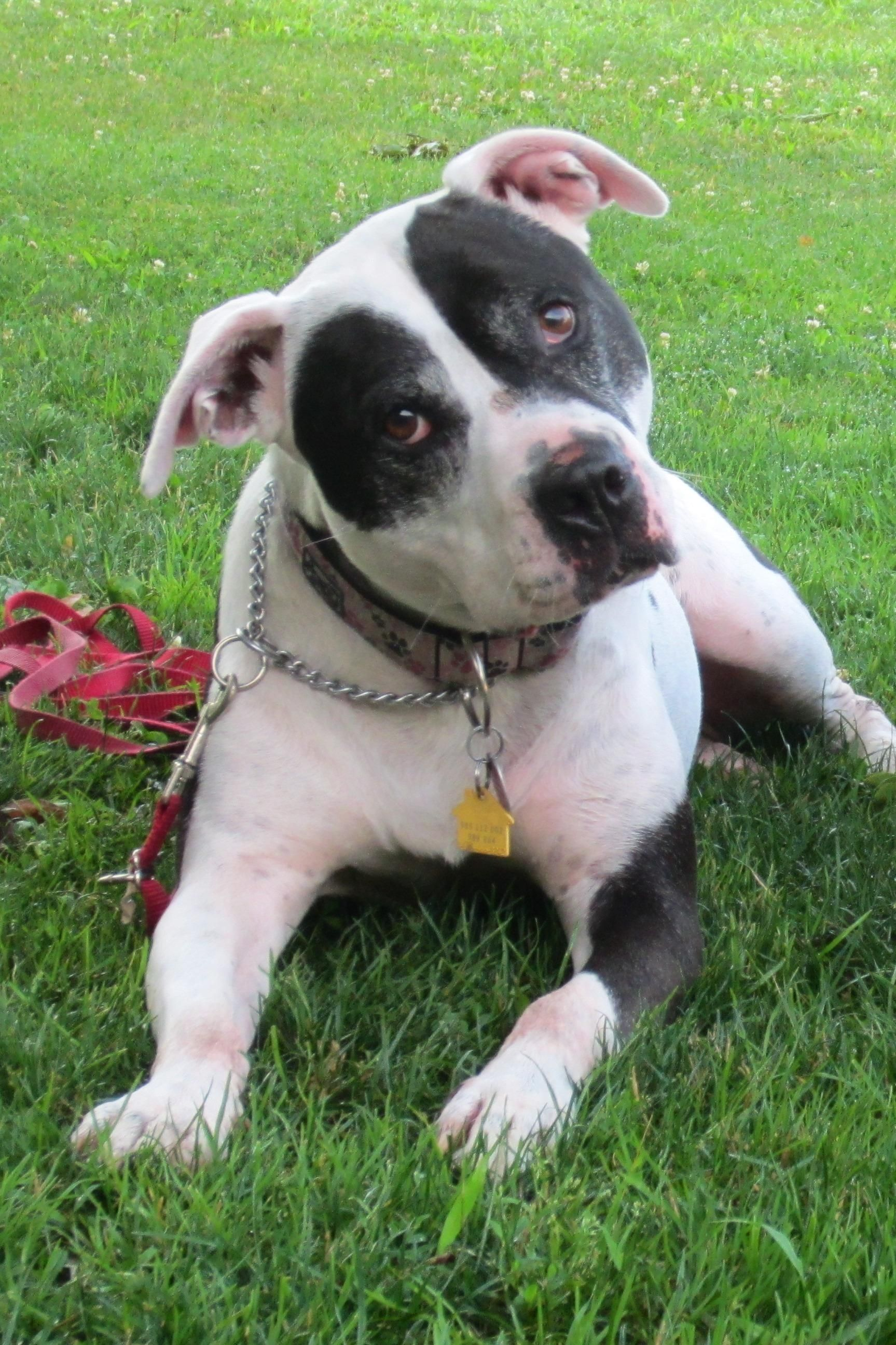 Adopt Lucy on Dogs, Pets, Pet adoption