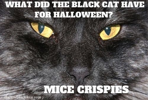 It S National Black Cat Day Happy Furday National Black Cat Day Black Cat Day Cats