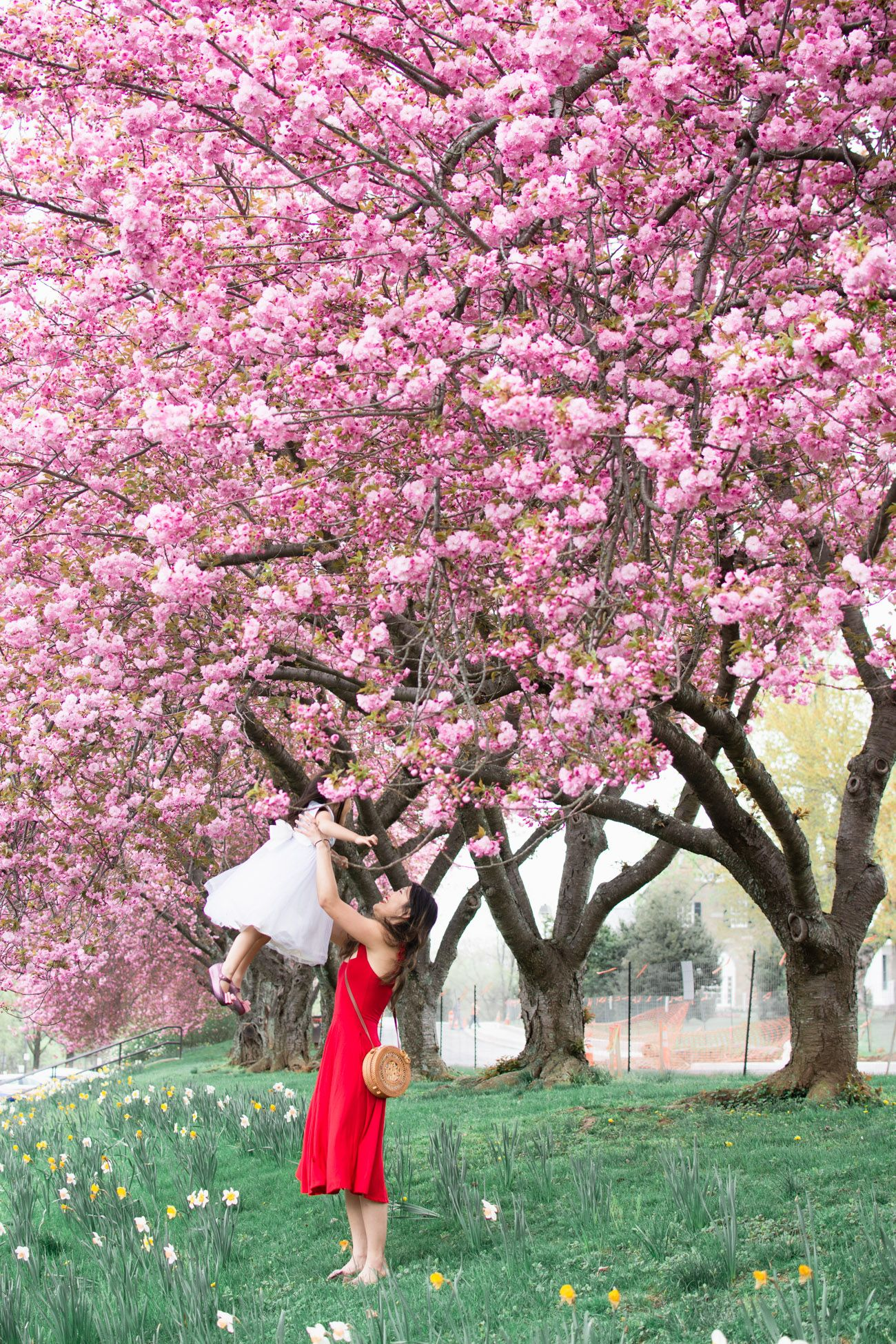 Every Single Flower Field In Washington Dc Maryland And Virginia Beautiful Blooms Cherry Blossom Washington Dc Washington Dc