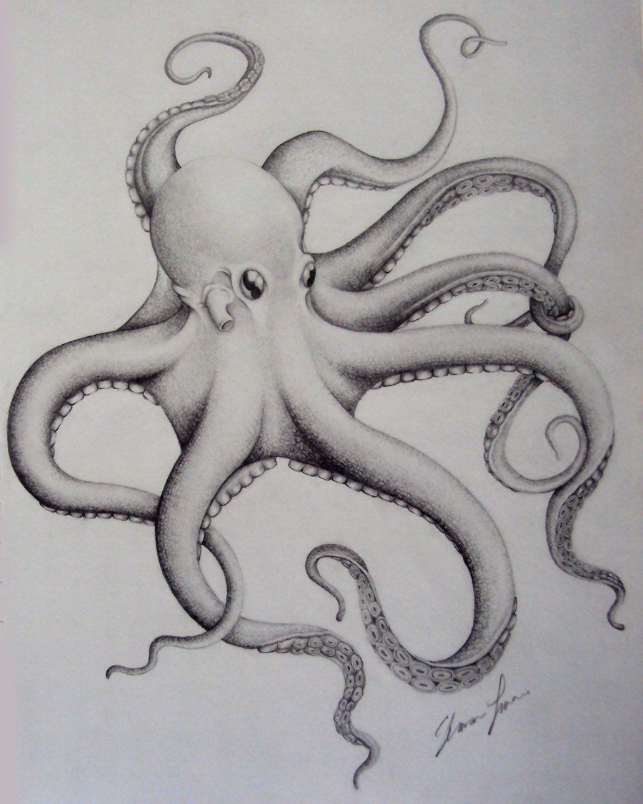 Realistic Octopus Drawing : realistic, octopus, drawing, Without, Octopus, Sketch,, Tattoo, Design,, Drawing