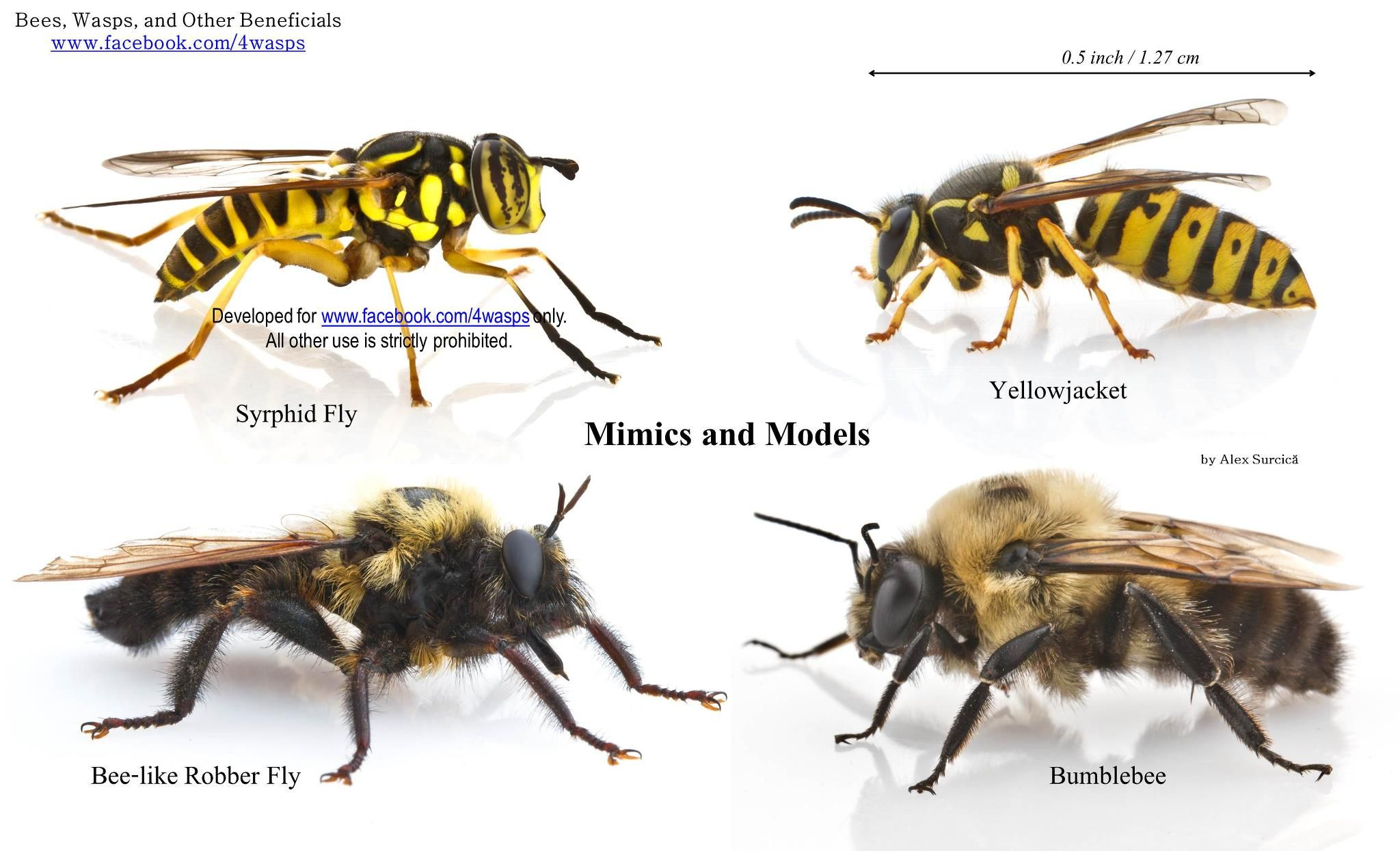 Wasps And Bees With Images Bee Bees Knees Science And Nature