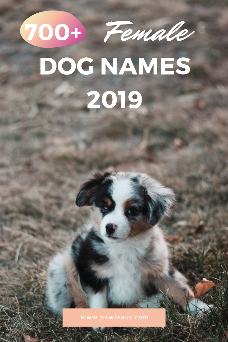 700 Unique Female Dog Names For 2020 Female Dog Names Dog Names Unique Female Dog Names