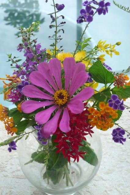 Florida native wildflowers -zinnia, lantana, penta