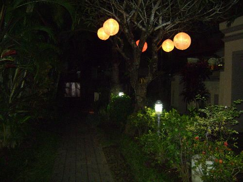 Lanterns hung from a tree!