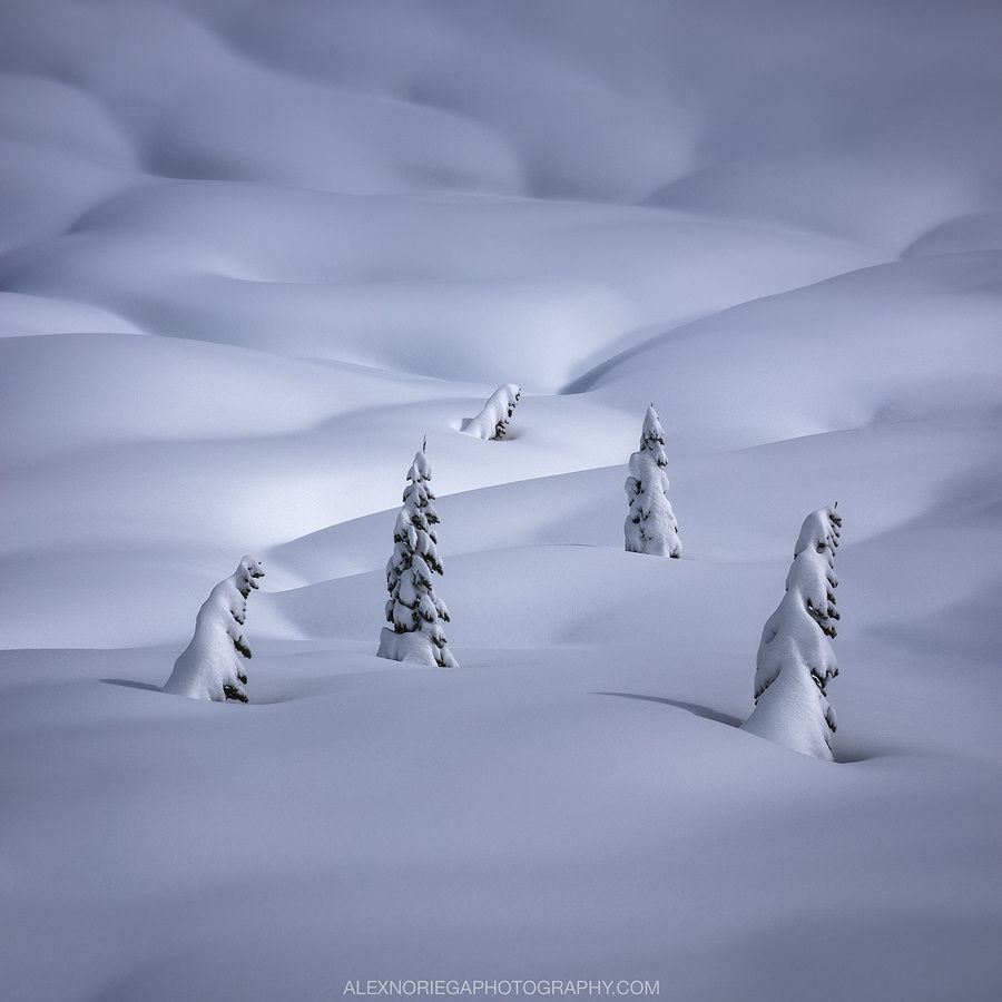 Hibernation by Alex Noriega