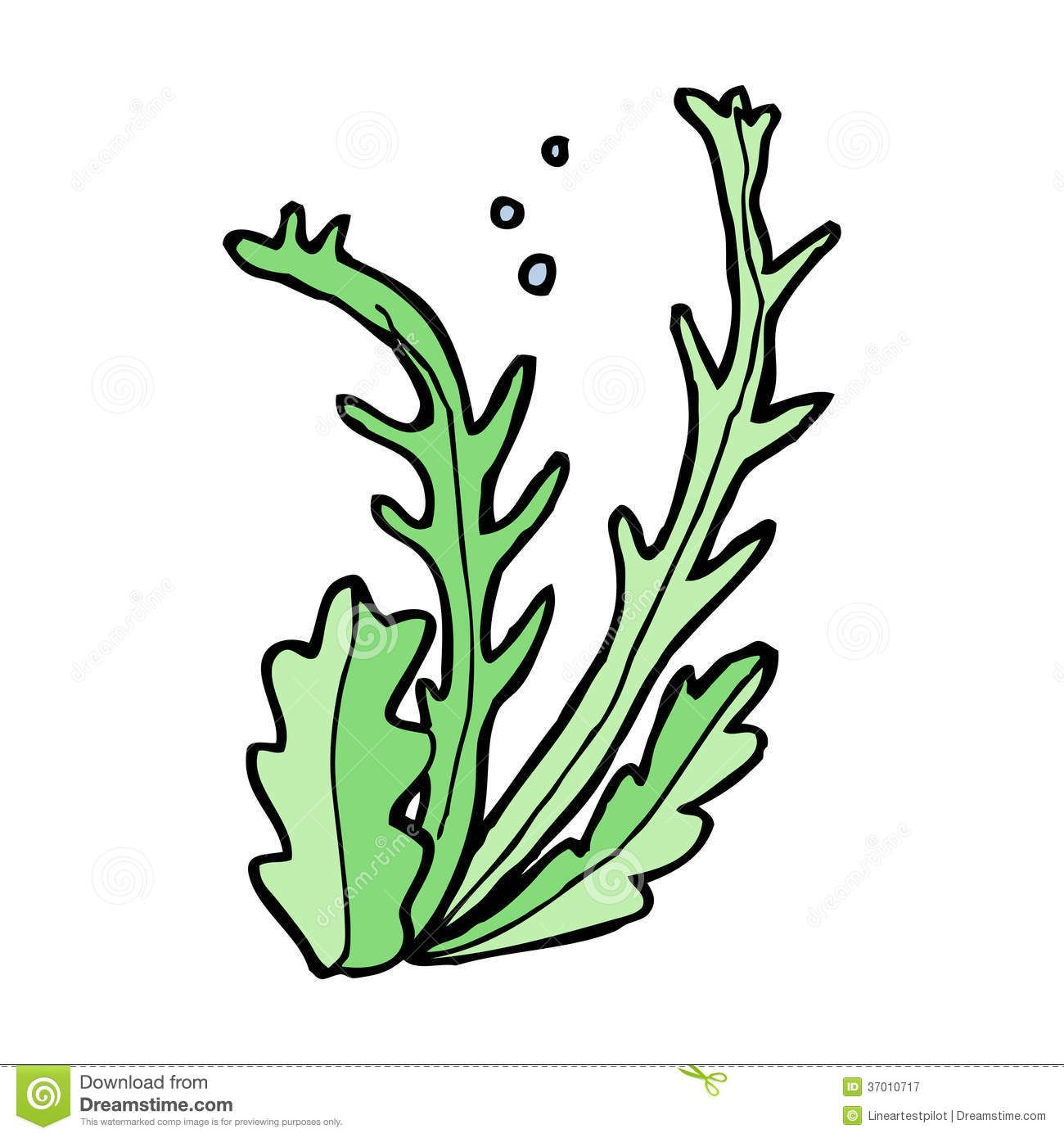 cartoon algae - Google-haku | web | Pinterest | Free clipart ...