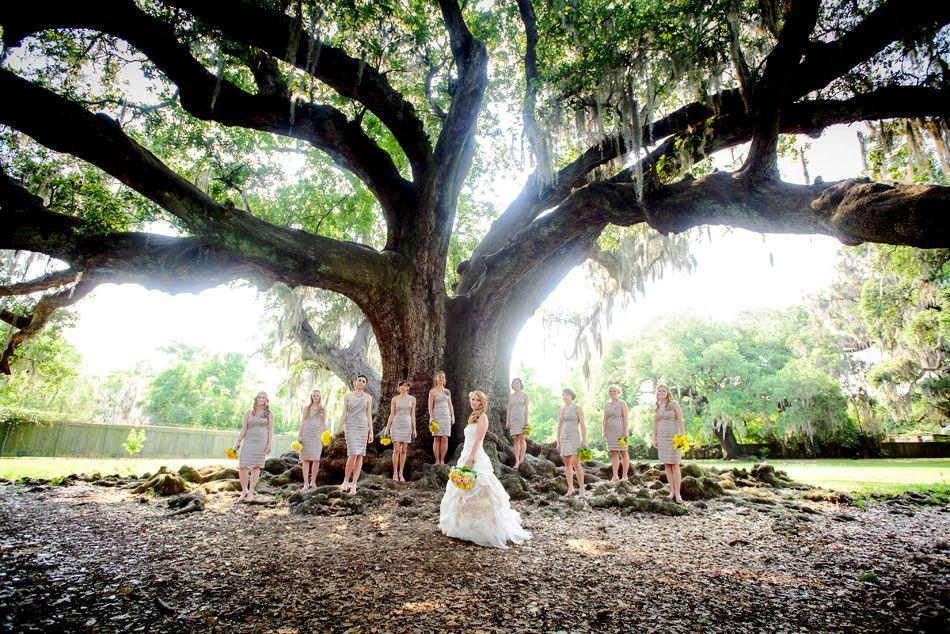 Audubon Park Tree Of Life Wedding. A Beautiful And Free
