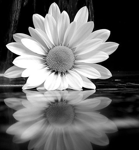 Black white photography spring pinterest black white black white photography mightylinksfo