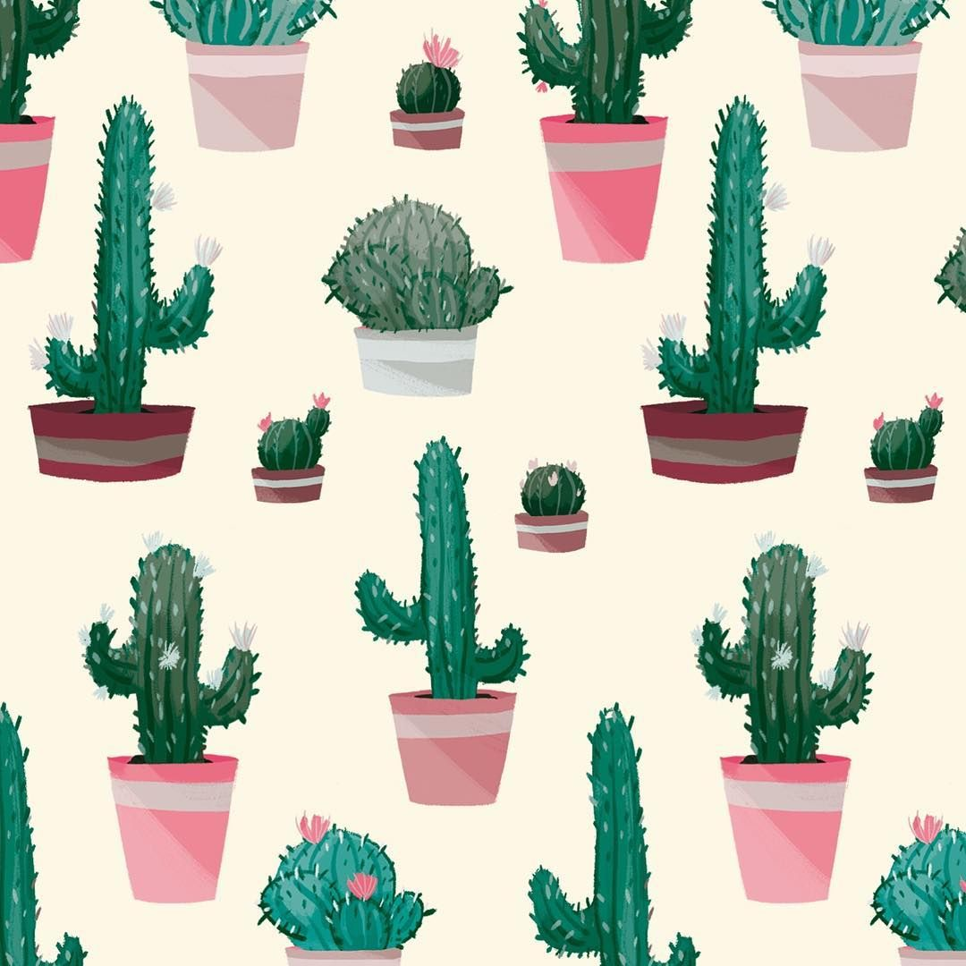 Les Piquants Cactus Plants Pot Plante Grassplant
