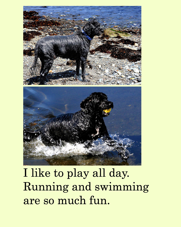 Ebook Macgyver The Wonder Dog Adventure To Grandpa S Farm