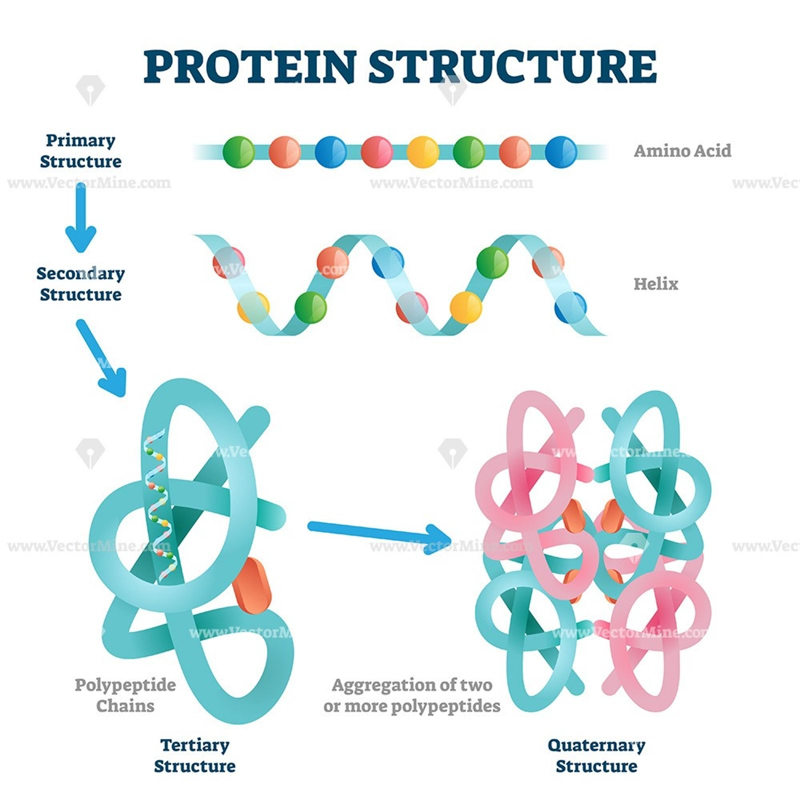 Protein Structure Vector Illustration In