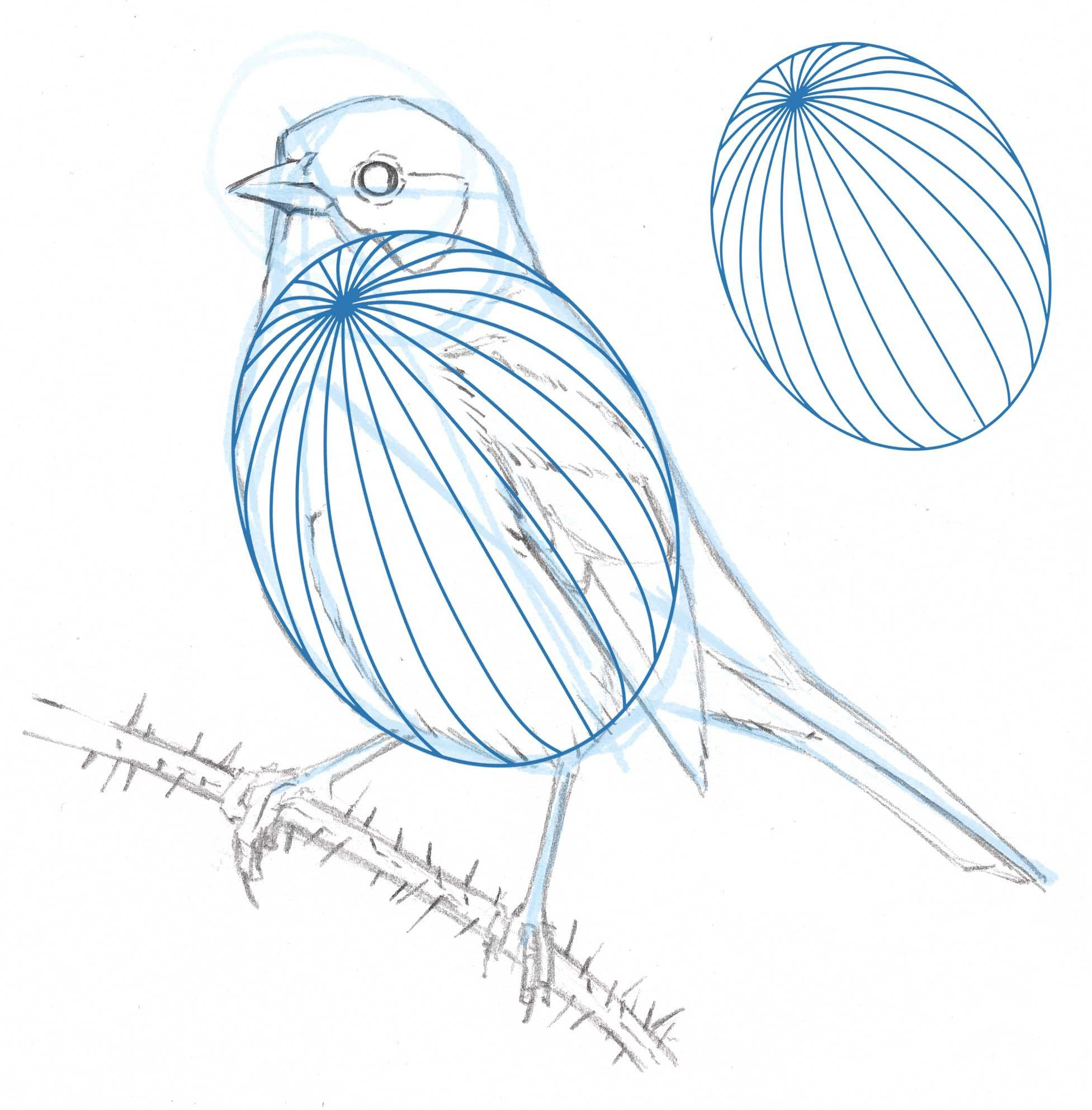 How to draw a Song Sparrow step-by-step - John Muir Laws ...