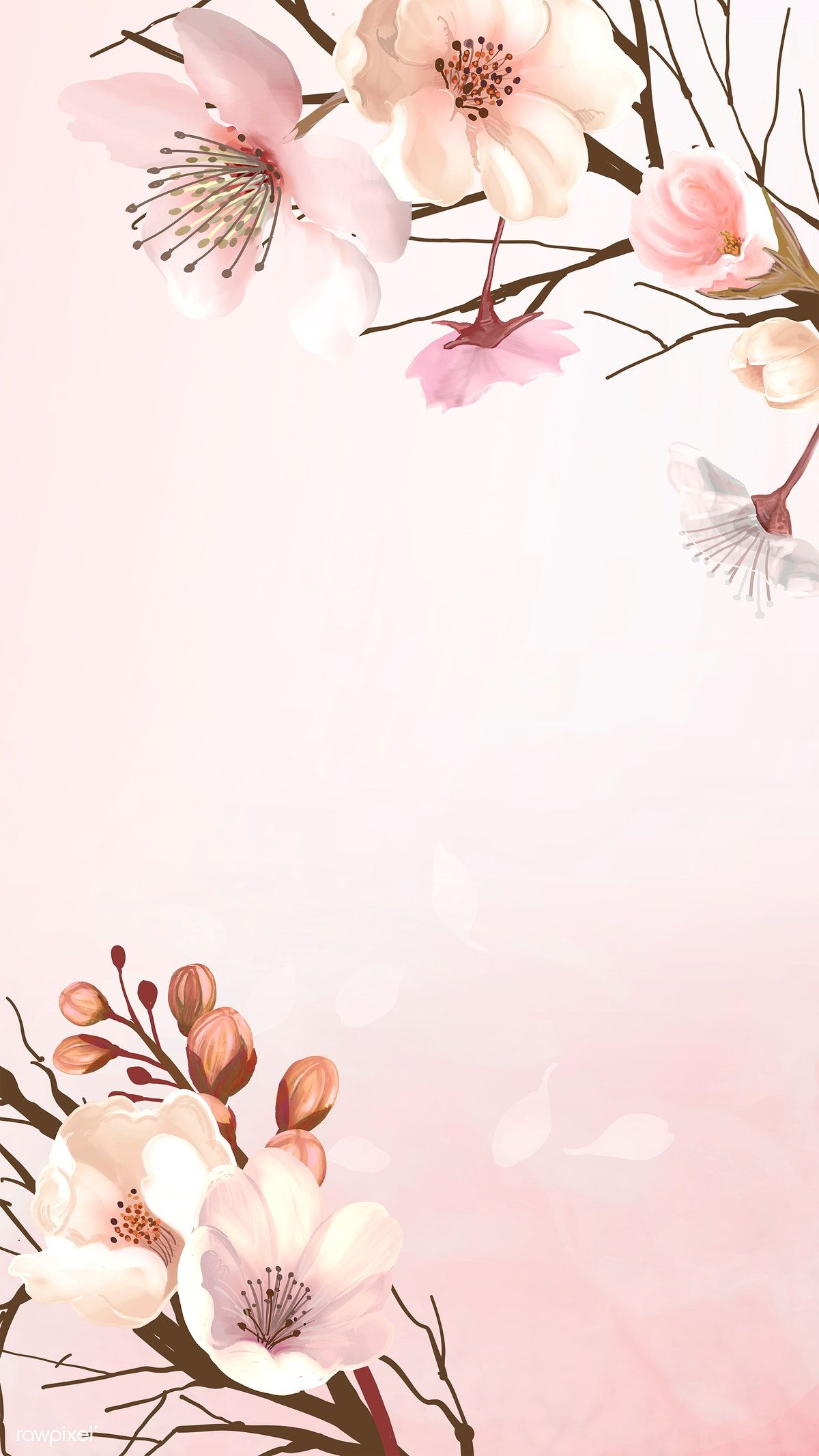Download Premium Illustration Of Hand Drawn Cherry Blossoms On A Pink Flower Background Wallpaper Flower Illustration Pink Background