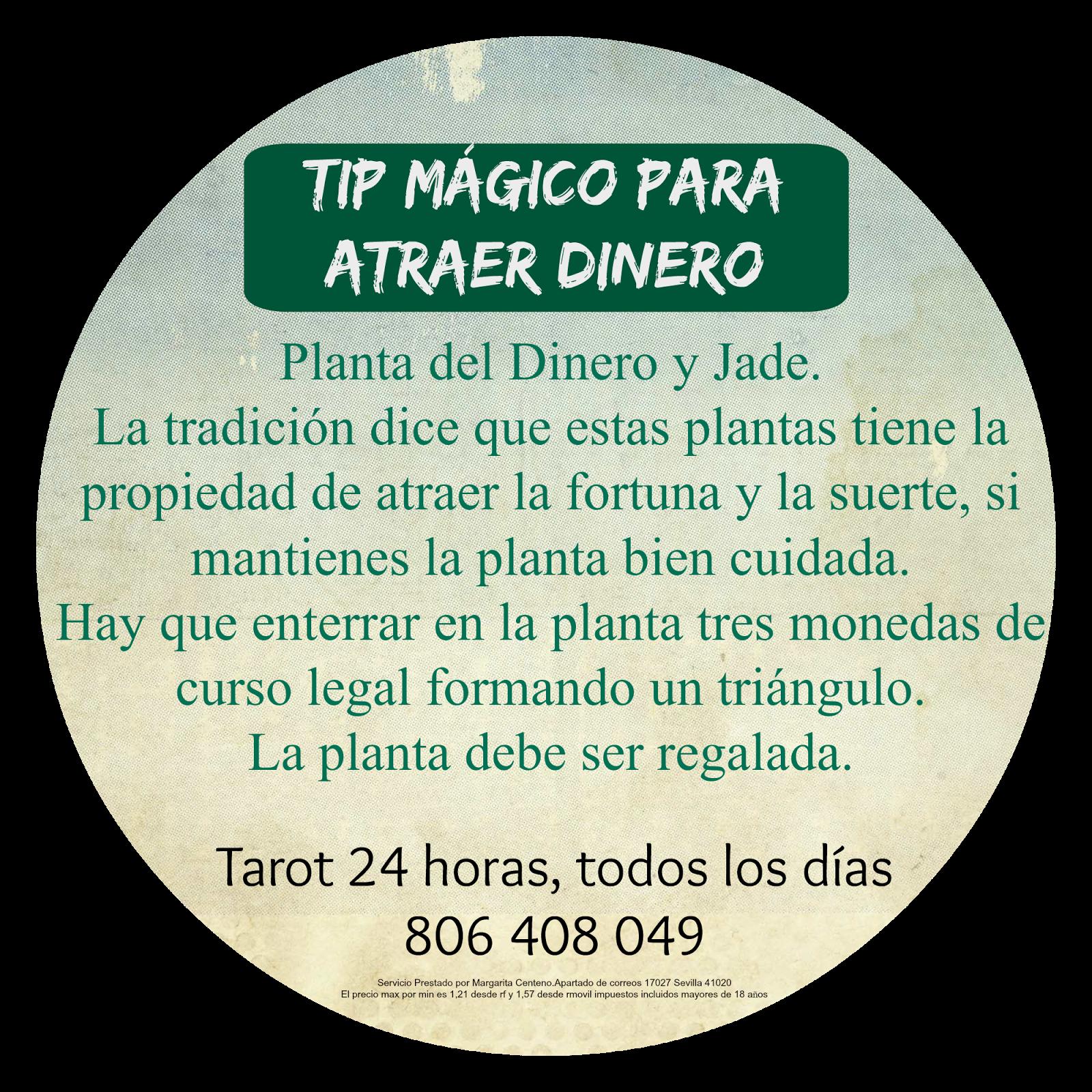 Tarot Y Rituales Con Margui Centeno Magia Blanca Consejo Mágico Para Atraer El Dinero Hechizos Y Conjuros Magia Blanca Tarot