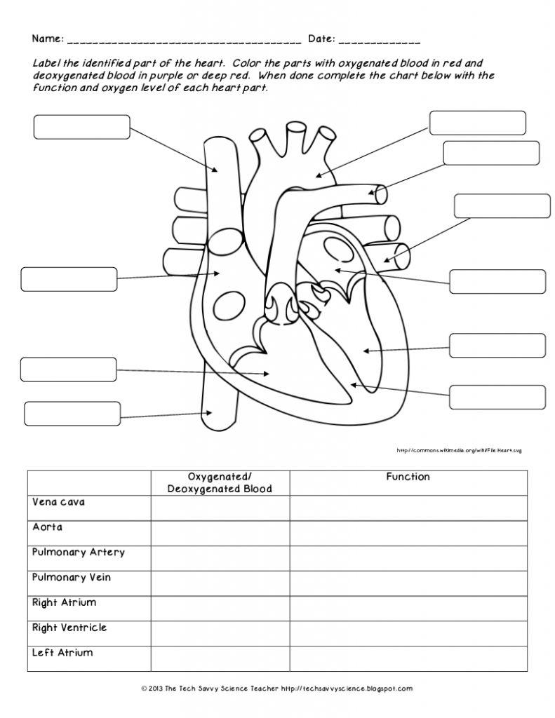 medium resolution of human anatomy labeling worksheets human body system labeling worksheets lesson plan syllabuyco