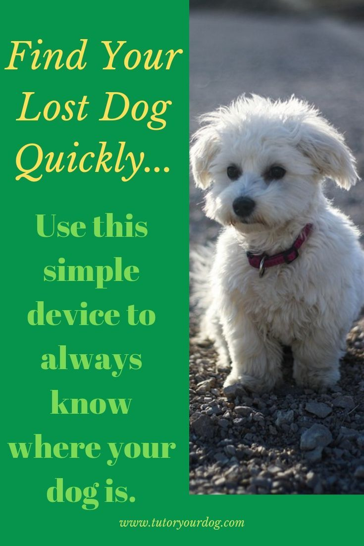 How To Find A Lost Dog Quickly Losing a dog, Online dog