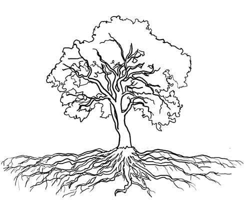 Searching For The Ideal Oak Tree With Roots Drawing Oak Tree